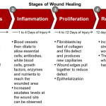 stages-of-wound-healing-awc-industry